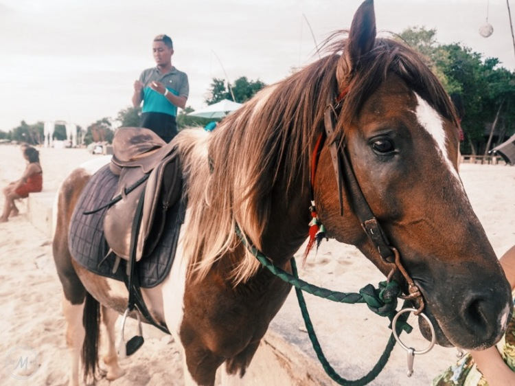 Suffering of Cidomo Horse on the Gili Islands - beautiful horse on the beach
