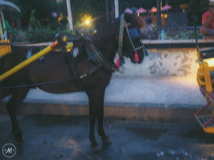 Suffering of Cidomo Horse on the Gili Islands - one Cidomo Horse reined in too tightly