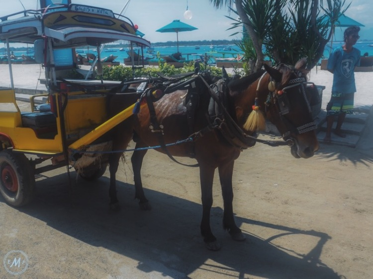 Suffering of Cidomo Horse on the Gili Islands - one Cidomo Horse that was clearly underweight