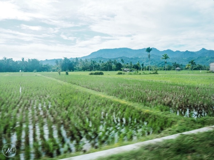 Travel Itinerary for a day trip to Lombok - Just some of Lombok's magically beautiful rice fields