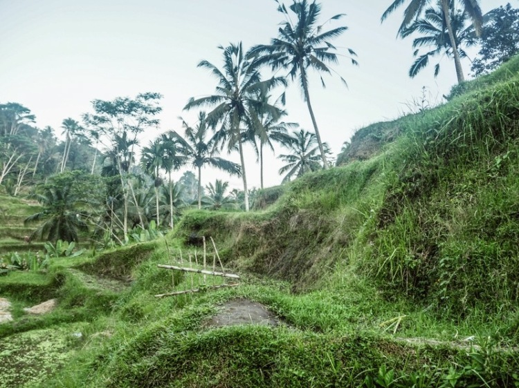 5 Unique Things to do in Ubud - things to do in Ubud bali (rice fields 2)